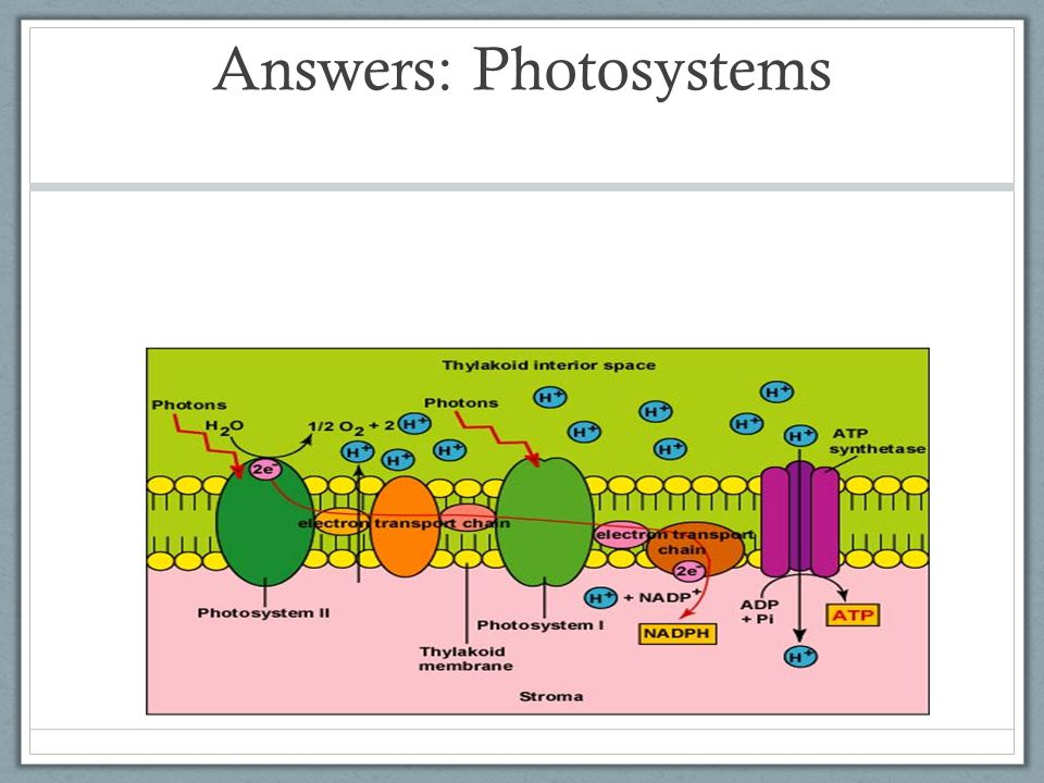 Answers: Photosystems
