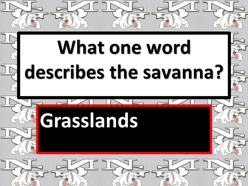 What one word describes the savanna? Grasslands