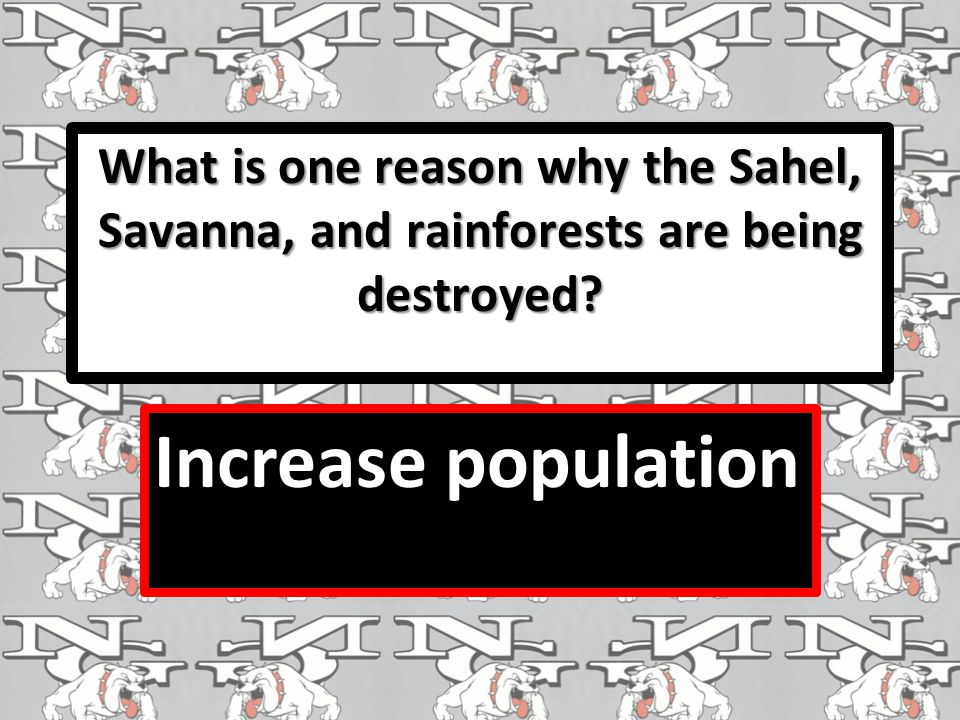 What is one reason why the Sahel, Savanna, and rainforests are being destroyed? Increase population