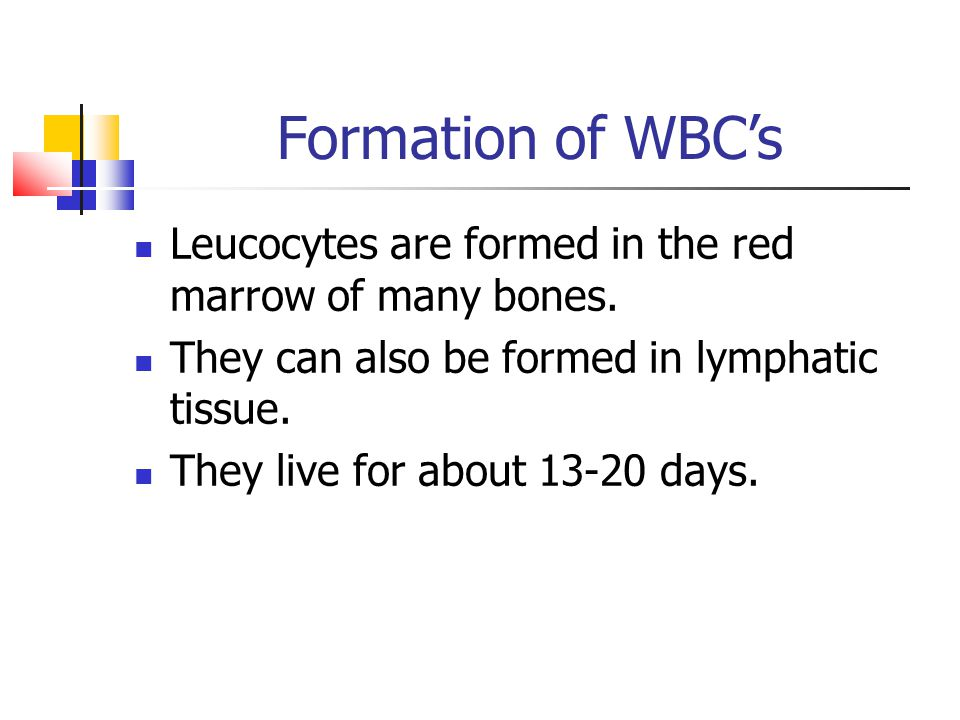 Formation of WBC's Leucocytes are formed in the red marrow of many bones. They can also be formed in lymphatic tissue. They live for about 13-20 days.