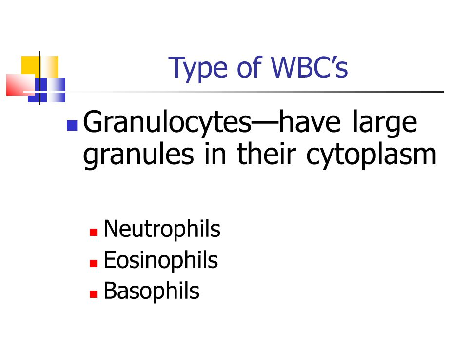 Type of WBC's Granulocytes—have large granules in their cytoplasm Neutrophils Eosinophils Basophils