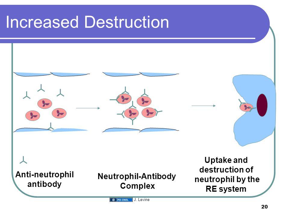 Increased Destruction Anti-neutrophil antibody Neutrophil-Antibody Complex Uptake and destruction of neutrophil by the RE system 20 J. Levine