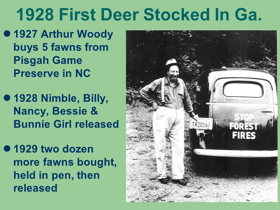 1928 First Deer Stocked In Ga.