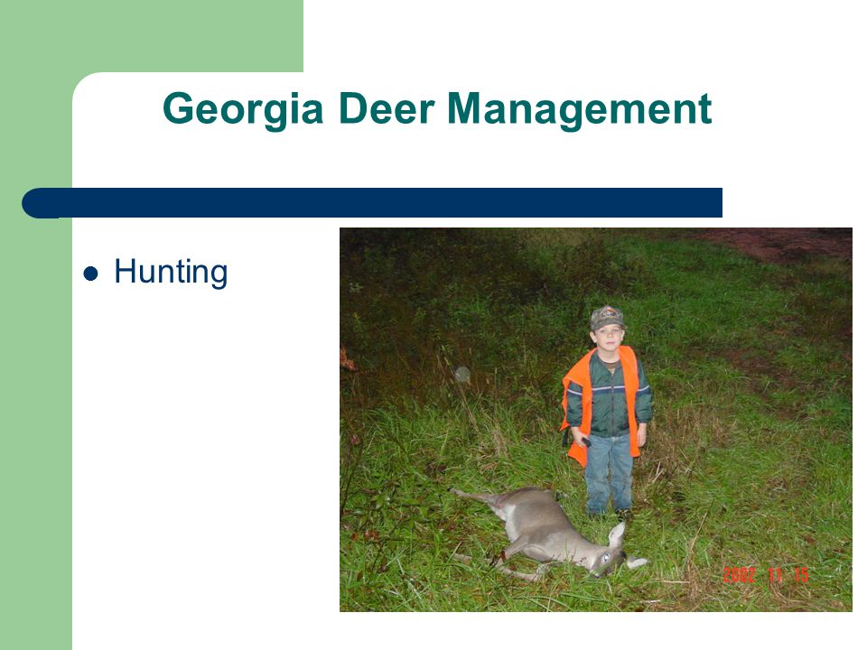 Georgia Deer Management Hunting
