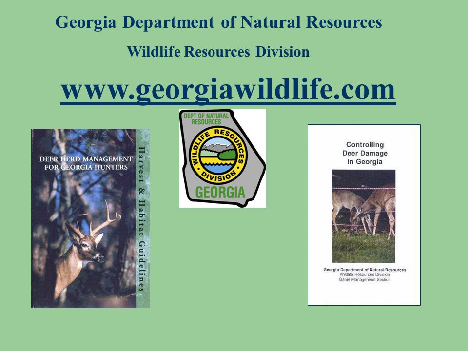 Georgia Department of Natural Resources Wildlife Resources Division www.georgiawildlife.com