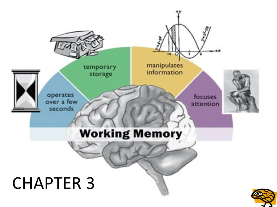 Heritability of working memory It is clear that the bulk of human nature and behavior; including predilections, predispositions, fears, personality, psychopathology, and motivations have evolved via natural selection upon genetic mutations over millions of years.