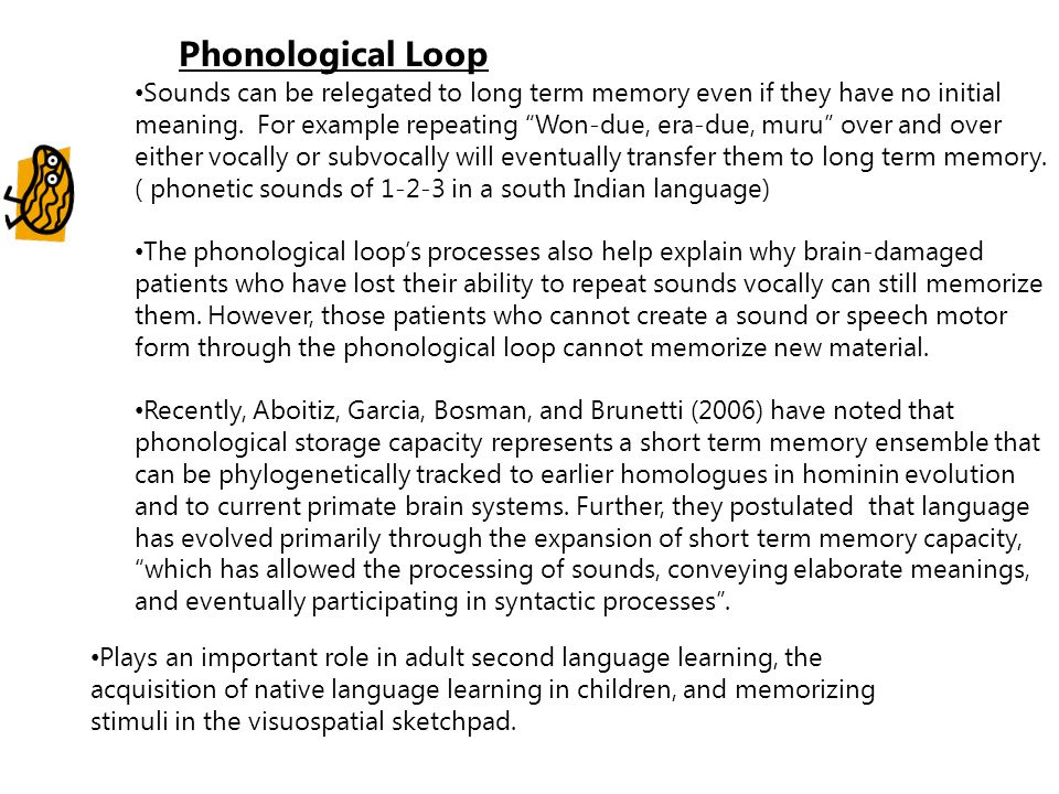 """Phonological Loop Sounds can be relegated to long term memory even if they have no initial meaning. For example repeating """"Won-due, era-due, muru"""" ove"""