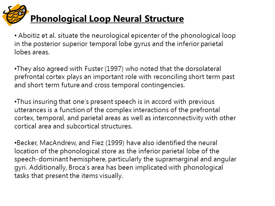 Phonological Loop Neural Structure Aboitiz et al. situate the neurological epicenter of the phonological loop in the posterior superior temporal lobe