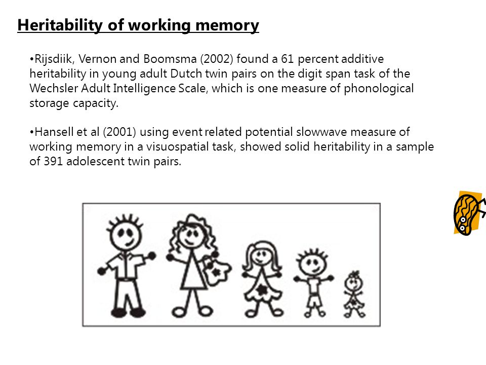 Heritability of working memory Rijsdiik, Vernon and Boomsma (2002) found a 61 percent additive heritability in young adult Dutch twin pairs on the dig