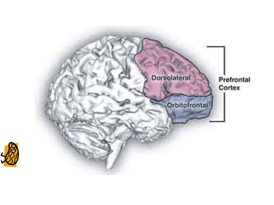 Declarative memory Baddeley proposed that greater working memory capacity would allow for the reflection and comparison of multiple past experiences and that this might allow an individual to actively choose a future action or create an alternative action (based on the success or failure of previous actions) rather than simply choosing the highest path of probably success.