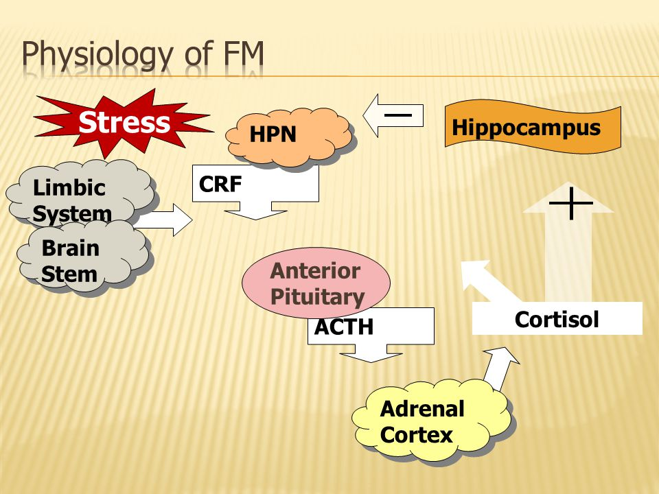 ACTH CRF Stress HPN Limbic System Anterior Pituitary Hippocampus Brain Stem Cortisol Adrenal Cortex