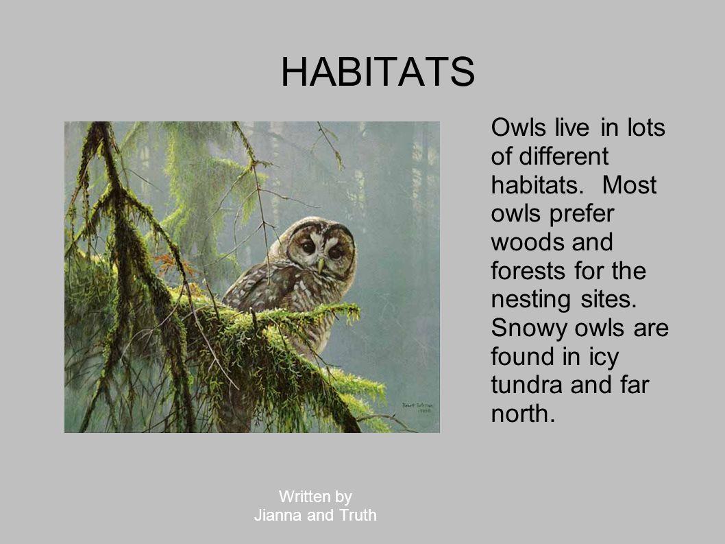 HABITATS Tiny elf owls live in deserts of north America.