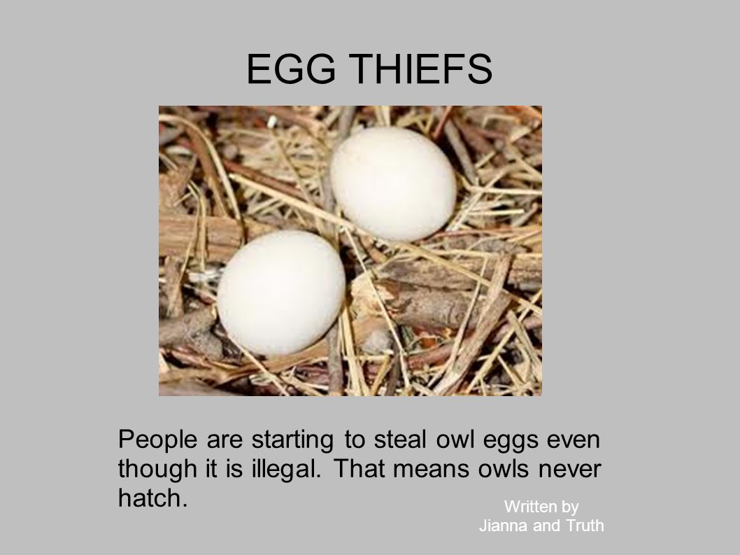 EGG THIEFS People are starting to steal owl eggs even though it is illegal. That means owls never hatch. Written by Jianna and Truth