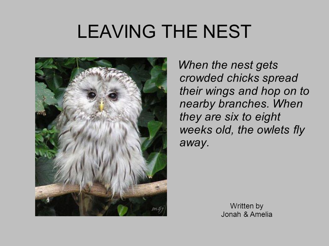 HABITAT LOSS Owl are under threat all around the world.