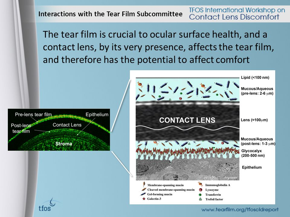 Interactions with the Tear Film Subcommittee The tear film is crucial to ocular surface health, and a contact lens, by its very presence, affects the tear film, and therefore has the potential to affect comfort
