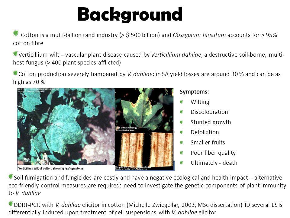 Background Cotton is a multi-billion rand industry (> $ 500 billion) and Gossypium hirsutum accounts for > 95% cotton fibre Verticillium wilt = vascular plant disease caused by Verticillium dahliae, a destructive soil-borne, multi- host fungus (> 400 plant species afflicted) Cotton production severely hampered by V.