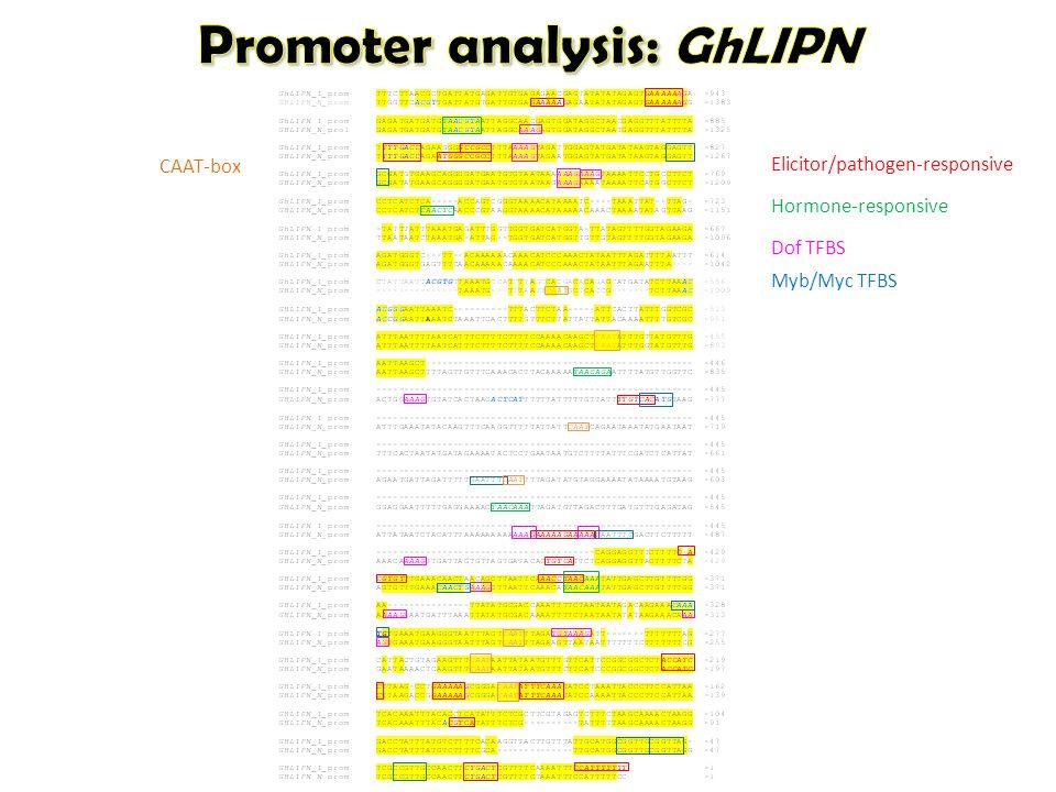 Elicitor/pathogen-responsive Dof TFBS Myb/Myc TFBS Hormone-responsive CAAT-box