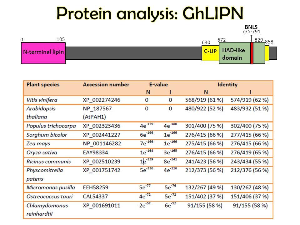 1 105 672 829 630 858 N-terminal lipin C-LIP HAD-like domain BNLS 775-791