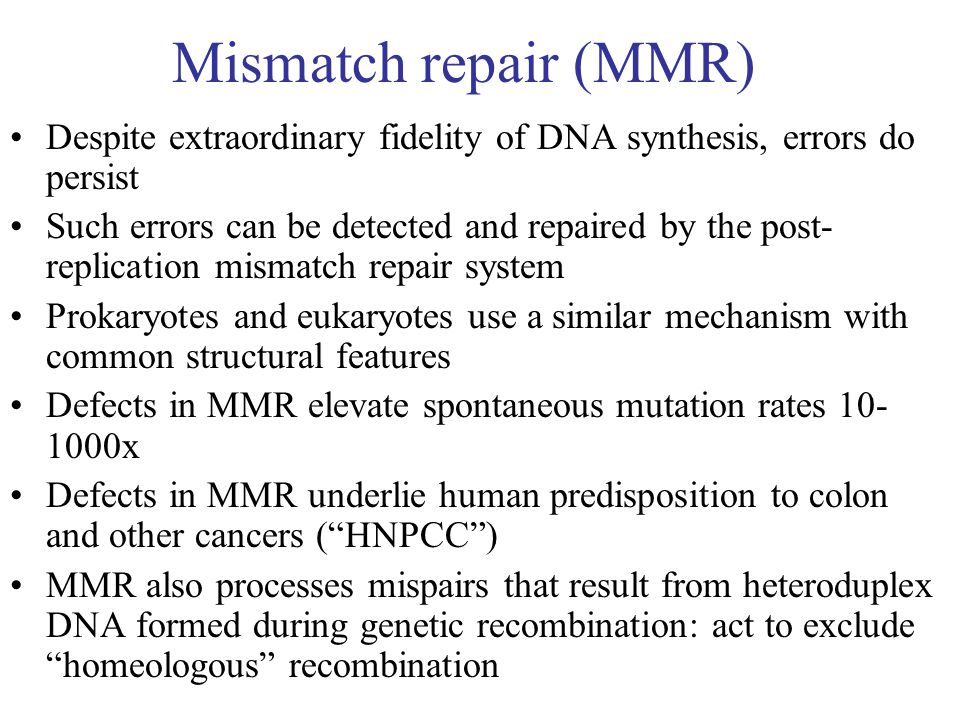 Mismatch repair (MMR) Despite extraordinary fidelity of DNA synthesis, errors do persist Such errors can be detected and repaired by the post- replication mismatch repair system Prokaryotes and eukaryotes use a similar mechanism with common structural features Defects in MMR elevate spontaneous mutation rates 10- 1000x Defects in MMR underlie human predisposition to colon and other cancers ( HNPCC ) MMR also processes mispairs that result from heteroduplex DNA formed during genetic recombination: act to exclude homeologous recombination