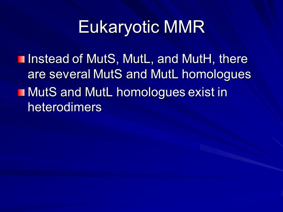 Eukaryotic MMR Instead of MutS, MutL, and MutH, there are several MutS and MutL homologues MutS and MutL homologues exist in heterodimers