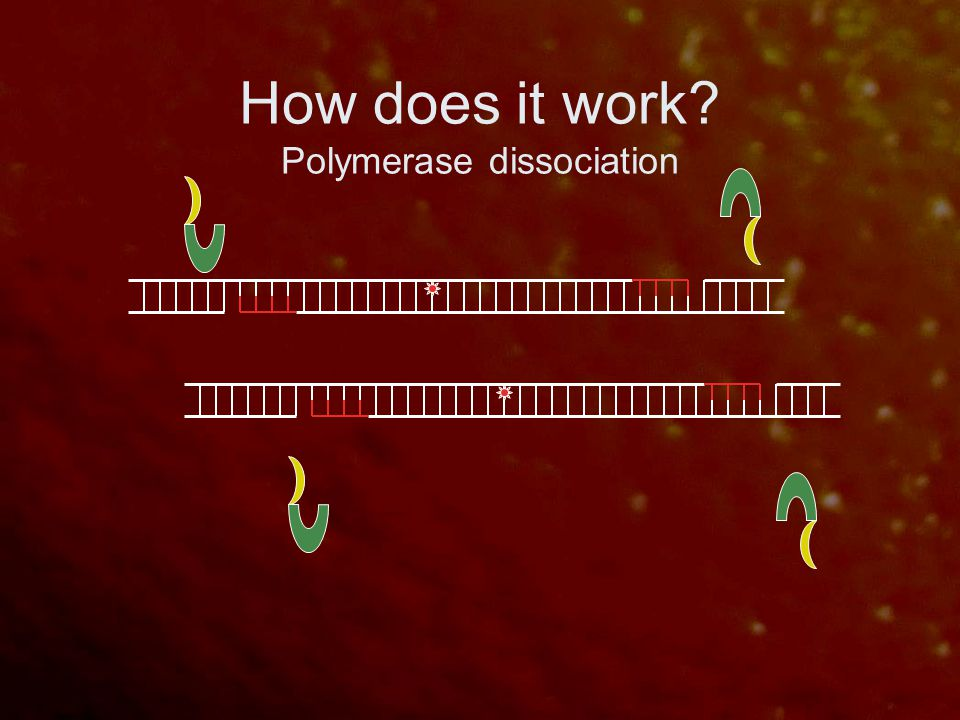 How does it work? Polymerase dissociation