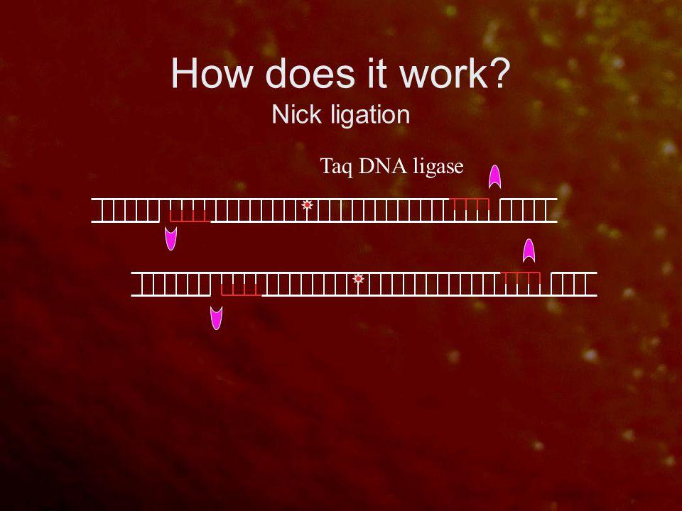 How does it work? Nick ligation Taq DNA ligase