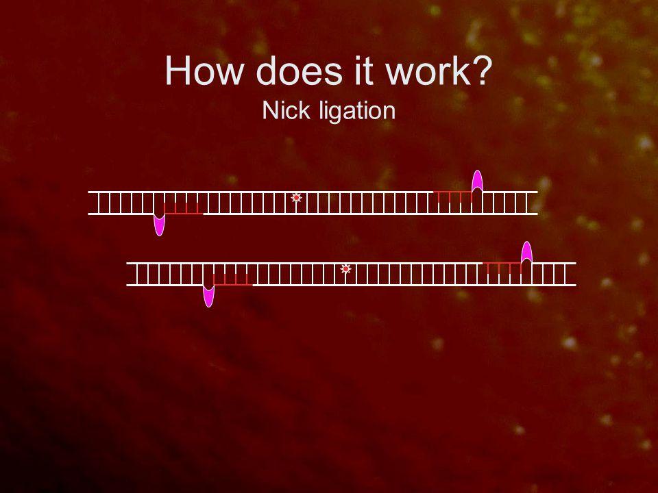 How does it work? Nick ligation