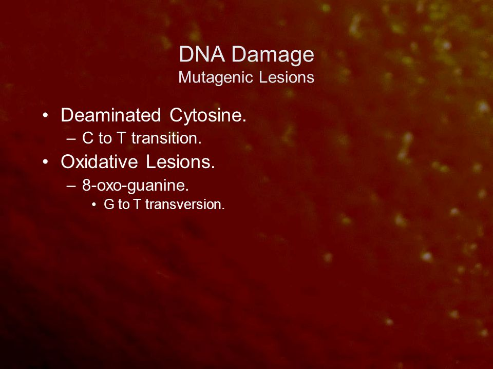 DNA Damage Mutagenic Lesions Deaminated Cytosine. –C to T transition. Oxidative Lesions. –8-oxo-guanine. G to T transversion.