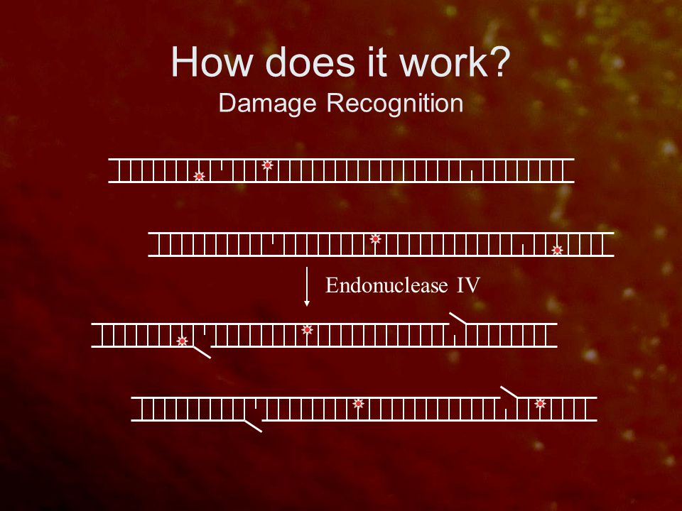 How does it work? Damage Recognition Endonuclease IV