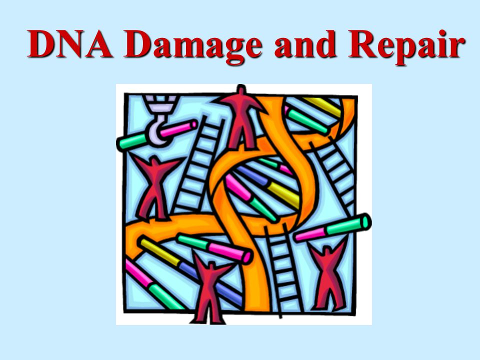 = ??.It is well-known that DNA can be damaged by radiation.