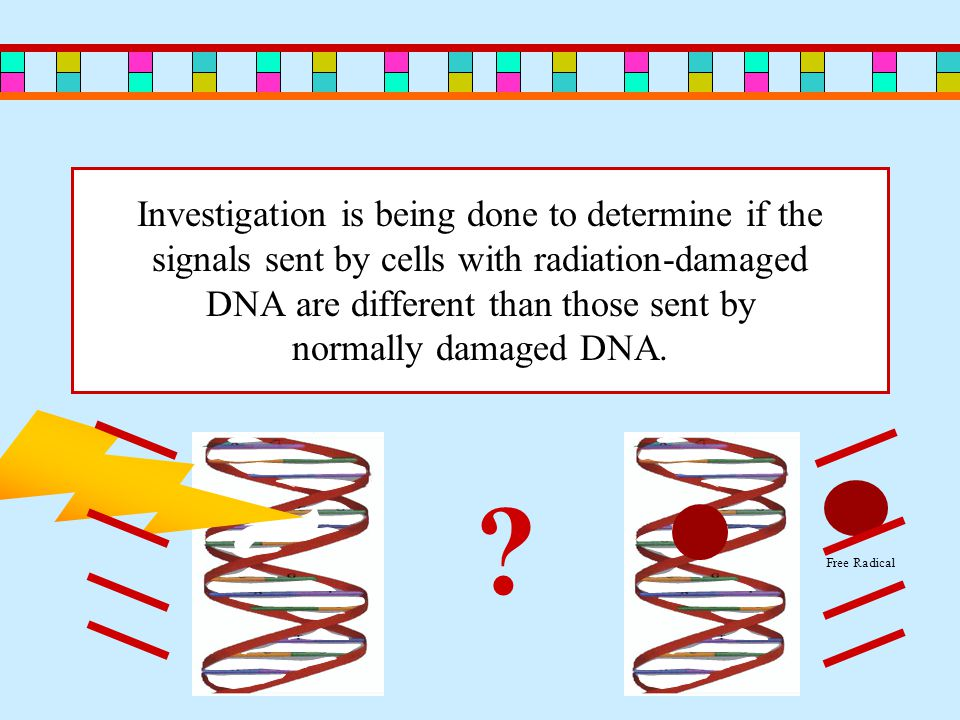 Investigation is being done to determine if the signals sent by cells with radiation-damaged DNA are different than those sent by normally damaged DNA