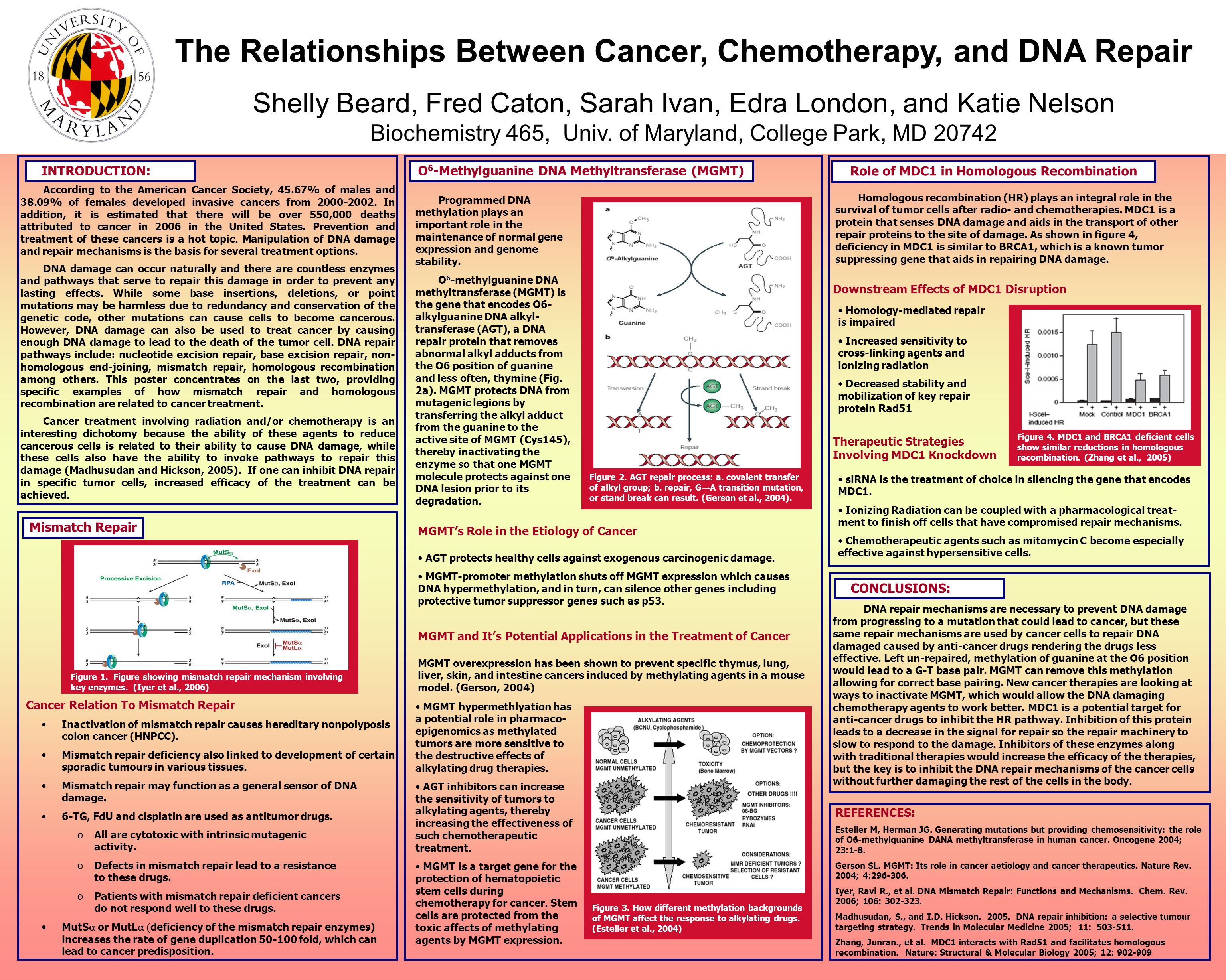 The Relationships Between Cancer, Chemotherapy, and DNA Repair Shelly Beard, Fred Caton, Sarah Ivan, Edra London, and Katie Nelson Biochemistry 465, Univ.