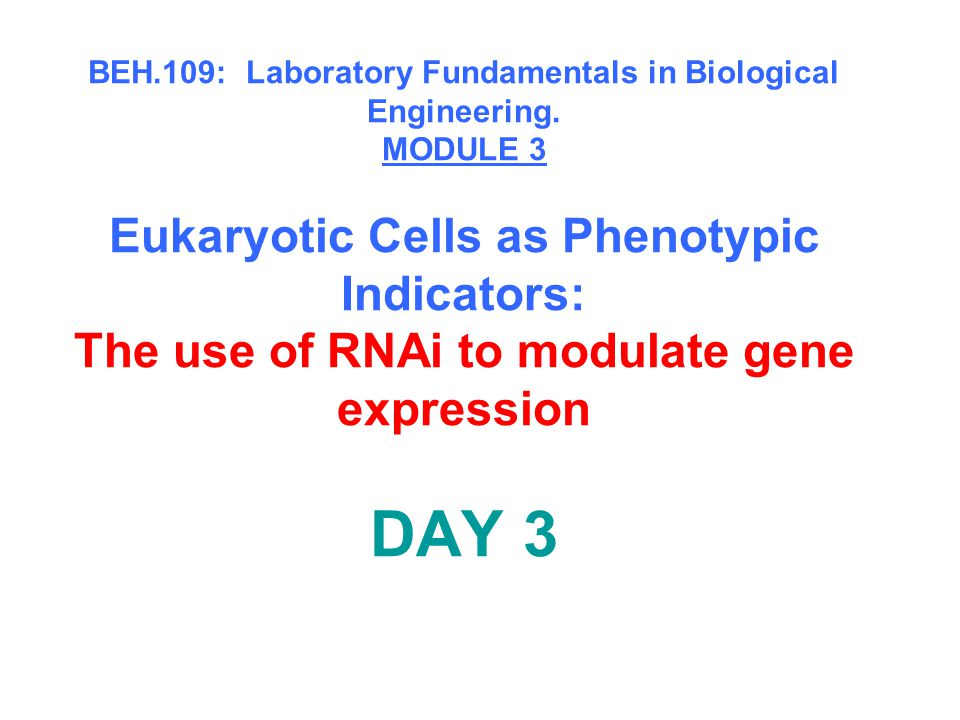 Snapshot of the next four weeks We will eliminate the expression of six different genes using RNAi technology, human cells, fluorescent proteins and DNA microarrays