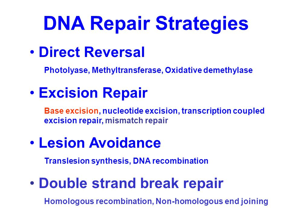 DNA Repair Strategies Direct Reversal Photolyase, Methyltransferase, Oxidative demethylase Excision Repair Base excision, nucleotide excision, transcr