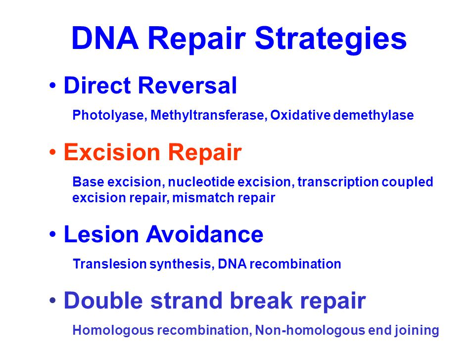 Excision Repair Recognition Excision Resynthesis Ligation
