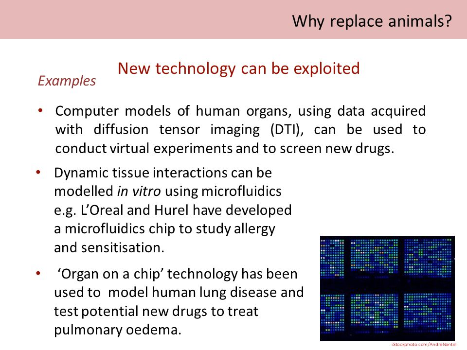 Examples Computer models of human organs, using data acquired with diffusion tensor imaging (DTI), can be used to conduct virtual experiments and to screen new drugs.