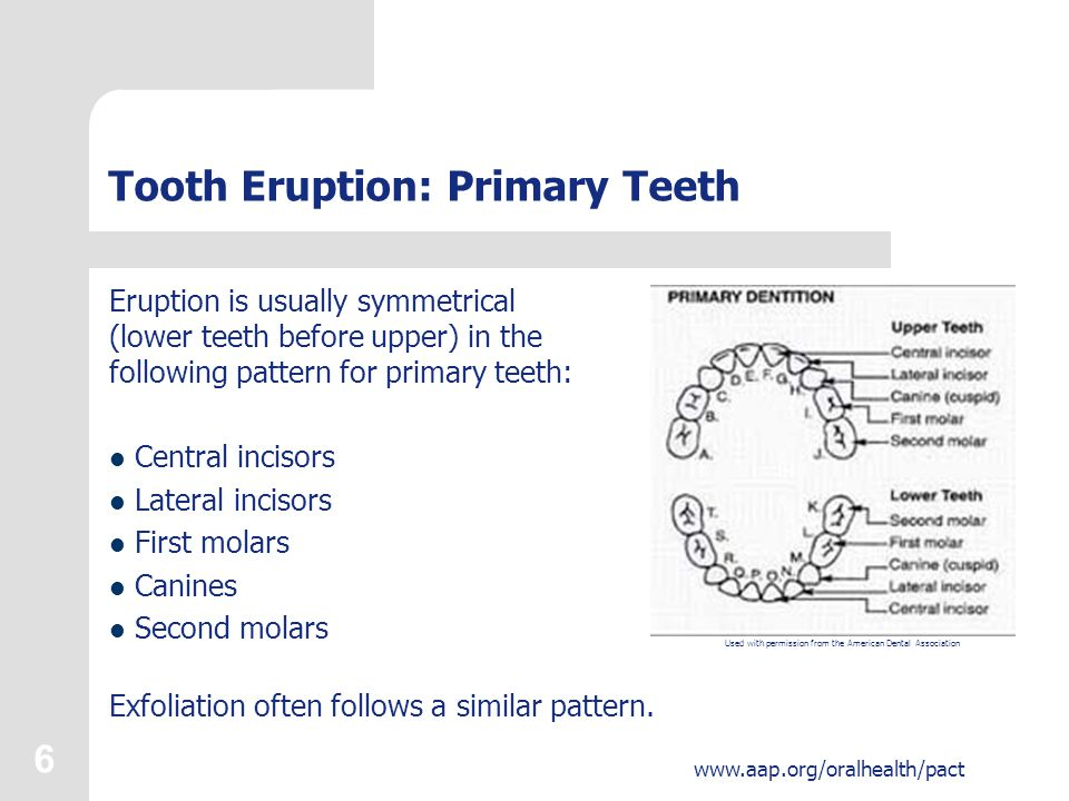6 www.aap.org/oralhealth/pact Tooth Eruption: Primary Teeth Eruption is usually symmetrical (lower teeth before upper) in the following pattern for primary teeth: Central incisors Lateral incisors First molars Canines Second molars Exfoliation often follows a similar pattern.