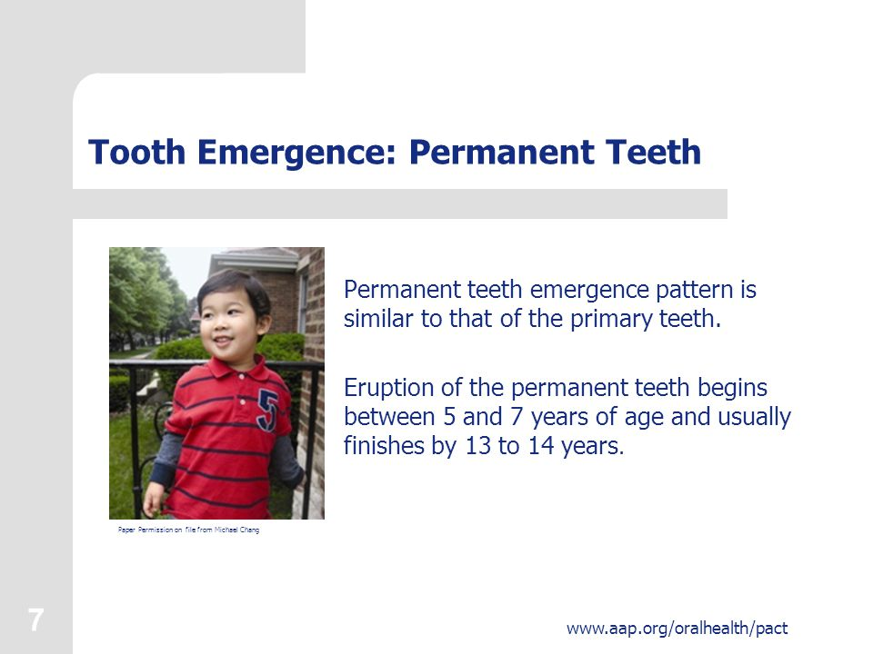 8 www.aap.org/oralhealth/pact Tooth Emergence: Permanent Teeth The typical pattern for permanent teeth eruption is: Central incisors Lateral incisors First molars Premolars Canines Second molars Third molars (wisdom teeth) Used with permission from the American Dental Association