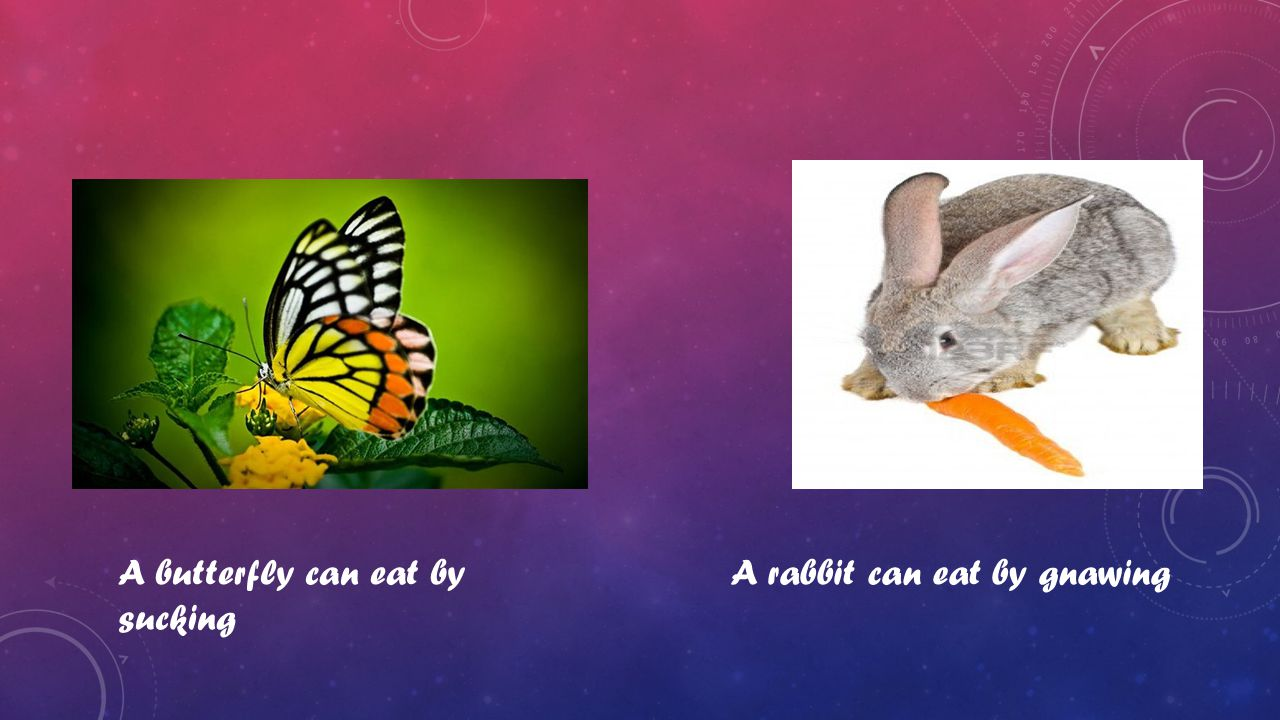 A butterfly can eat by sucking A rabbit can eat by gnawing