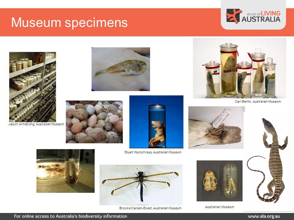 Carl Bento, Australian Museum Jason Armstrong, Australian Museum Australian Museum Stuart Humphreys, Australian Museum Museum specimens Brooke Carson-Ewart, Australian Museum
