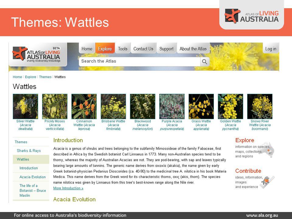 Themes: Wattles