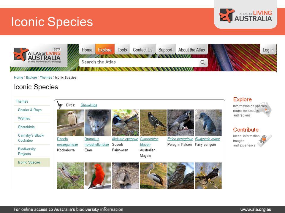 Iconic Species