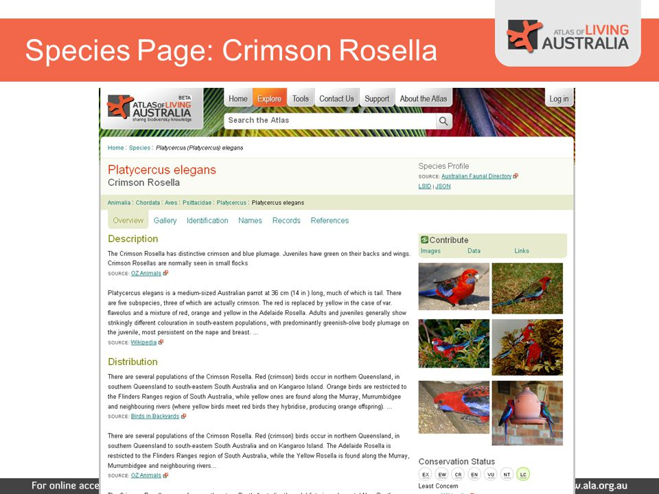 Species Page: Crimson Rosella