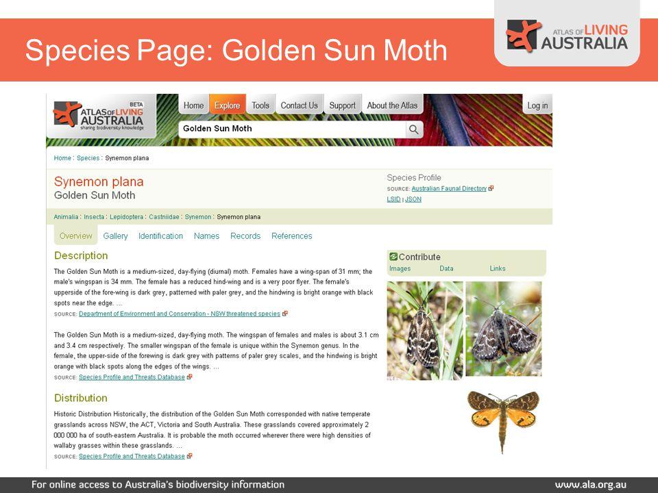 Species Page: Golden Sun Moth