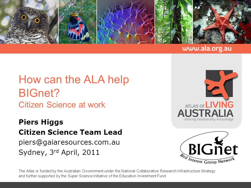 How can the ALA help BIGnet.