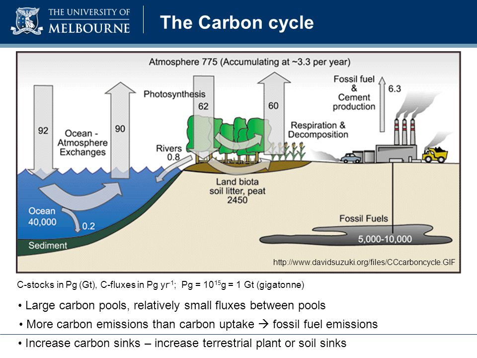 The Carbon cycle http://www.davidsuzuki.org/files/CCcarboncycle.GIF C-stocks in Pg (Gt), C-fluxes in Pg yr -1 ; Pg = 10 15 g = 1 Gt (gigatonne) More carbon emissions than carbon uptake  fossil fuel emissions Increase carbon sinks – increase terrestrial plant or soil sinks Large carbon pools, relatively small fluxes between pools