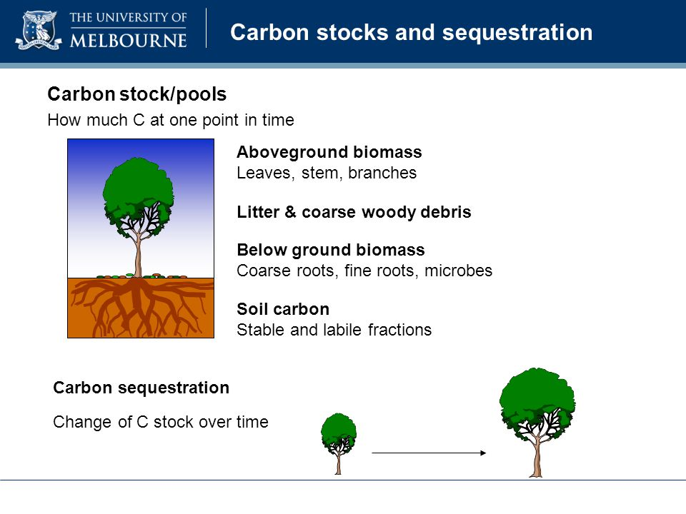 Carbon stocks and sequestration Carbon stock/pools Carbon sequestration How much C at one point in time Change of C stock over time Aboveground biomass Leaves, stem, branches Below ground biomass Coarse roots, fine roots, microbes Soil carbon Stable and labile fractions Litter & coarse woody debris