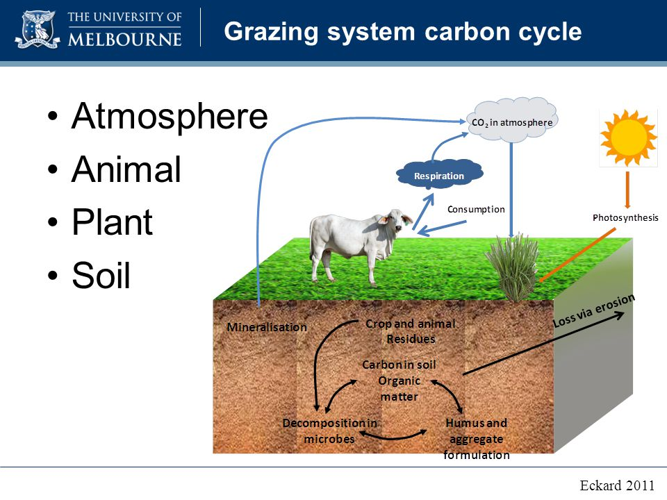 Grazing system carbon cycle Atmosphere Animal Plant Soil Eckard 2011