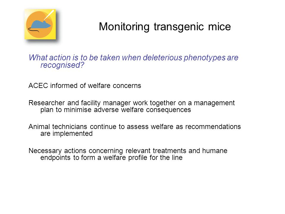 Monitoring transgenic mice What action is to be taken when deleterious phenotypes are recognised.