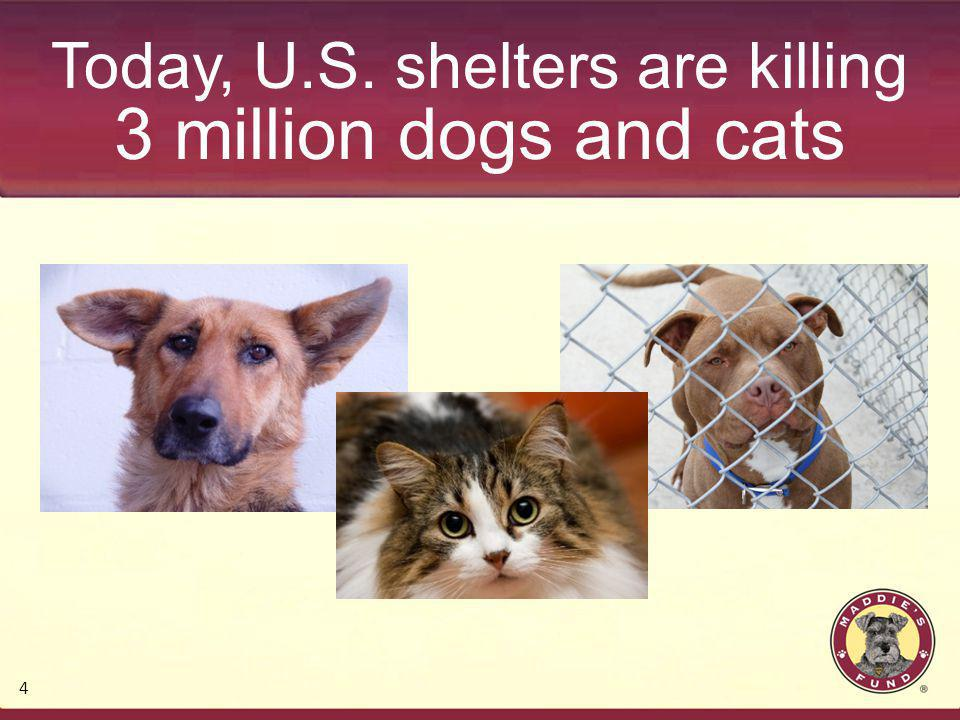 Today, U.S. shelters are killing 3 million dogs and cats 4